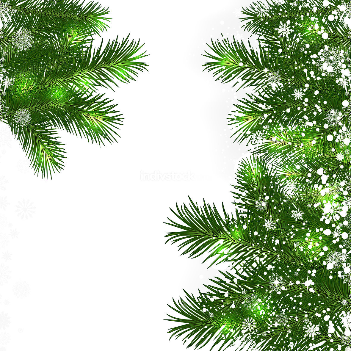 Christmas background with green branches of Christmas tree.