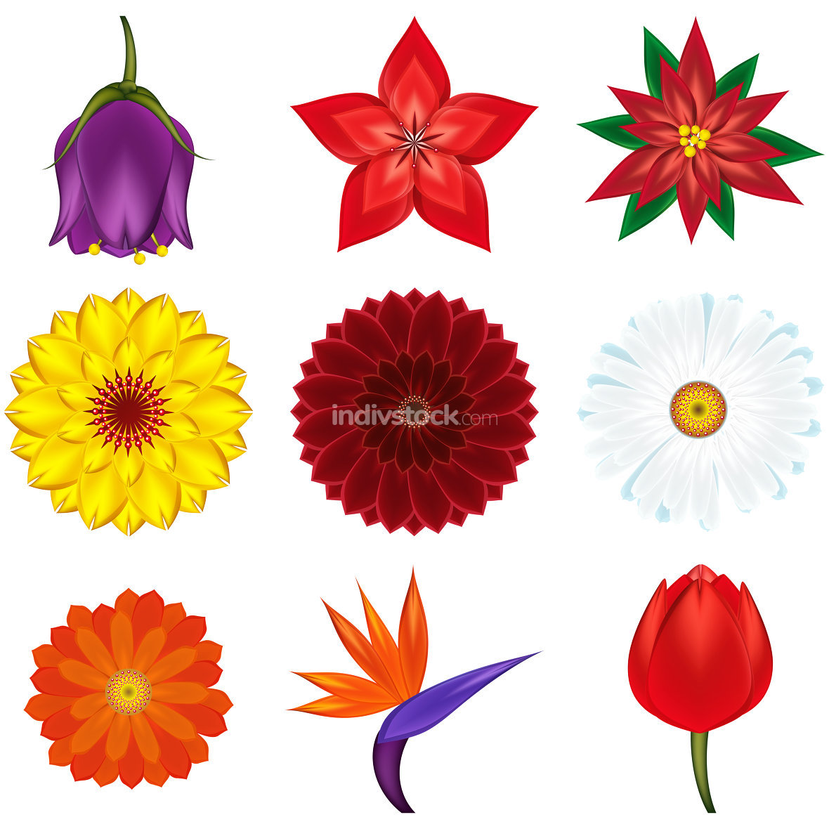 Collection of popular and exotic flowers