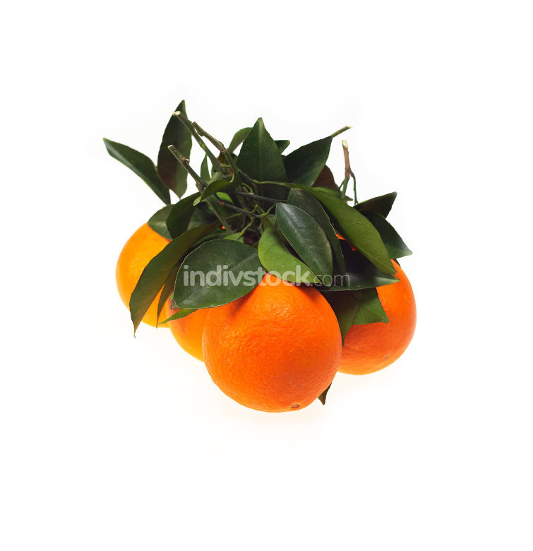 fresh orange isolated