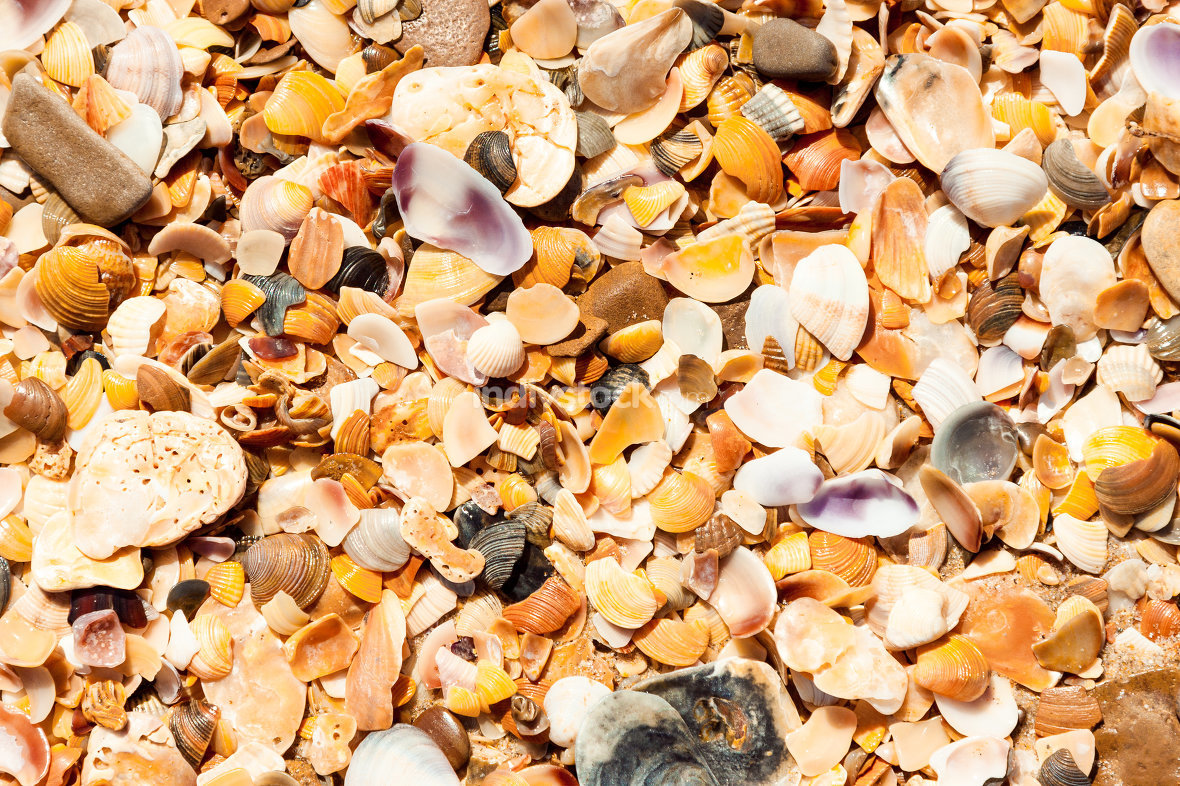 Shelly background. A scattering of fragments of marine shells