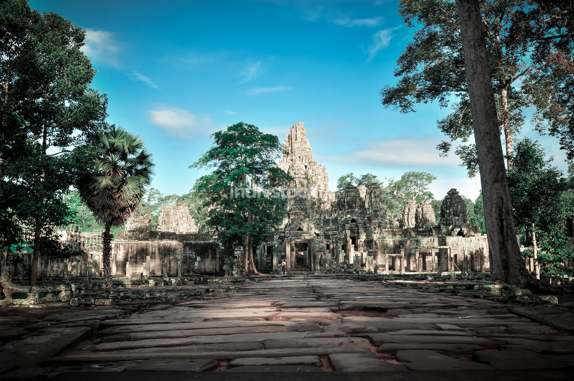 Giant tree covering Ta Prom and Angkor Wat temple, Siem Reap