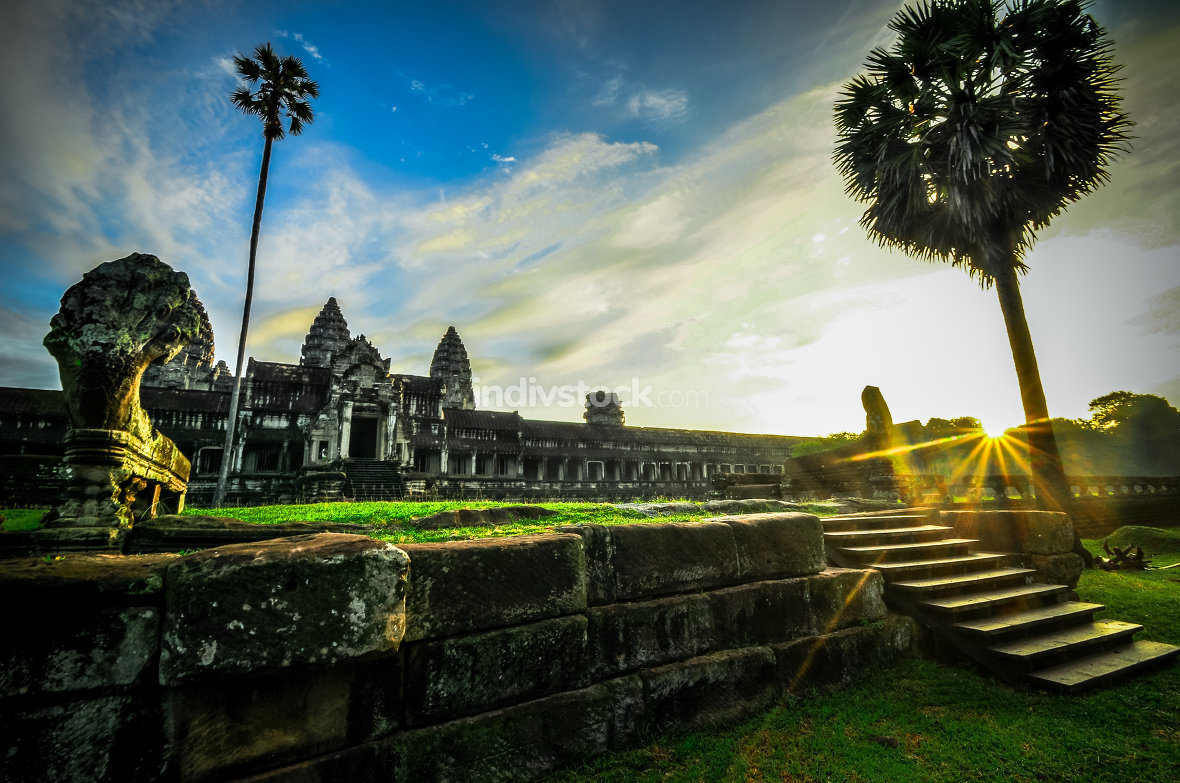 Giant tree covering Ta Prom and Angkor Wat temple, Siem Reap, Ca