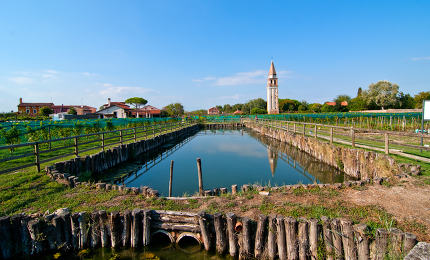 "Venice Burano Mazzorbo vineyard ""campanile "" bell tower of Saint Caterina"