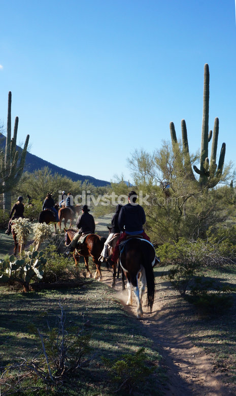 Arizona horse riding adventures