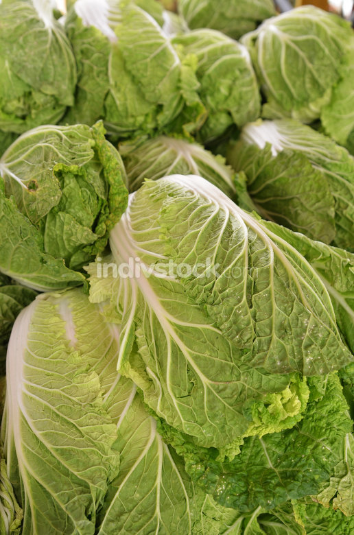Chinese lettuce on sale