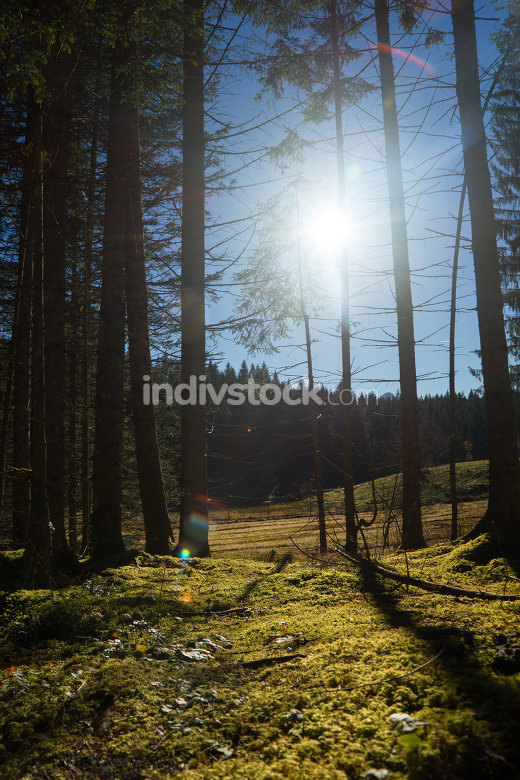 Forest backlit