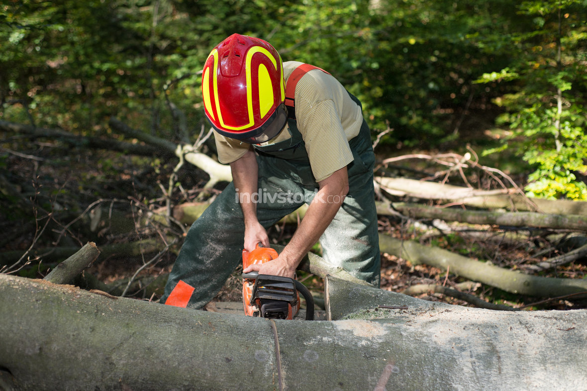 Forestry workers with protective clothing when sawing