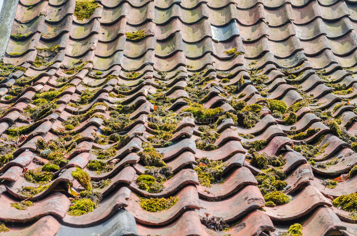 free download: Old roof tiles, green education, roofs