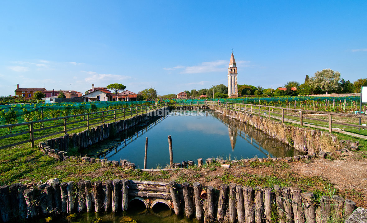 "Venice Burano Mazzorbo vineyard ""campanile "" bell tower of Saint Caterina"