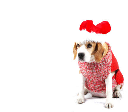 Christmas Dog As Santa