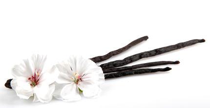 Vanilla Bean And Flower
