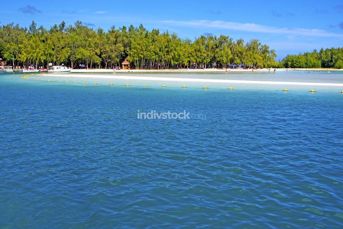 beach ile du cerfs seaweed   indian ocean tree