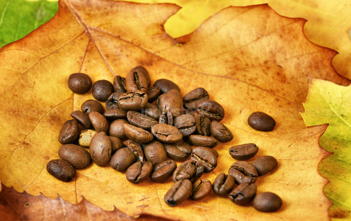 Coffee beans on autumn leaves