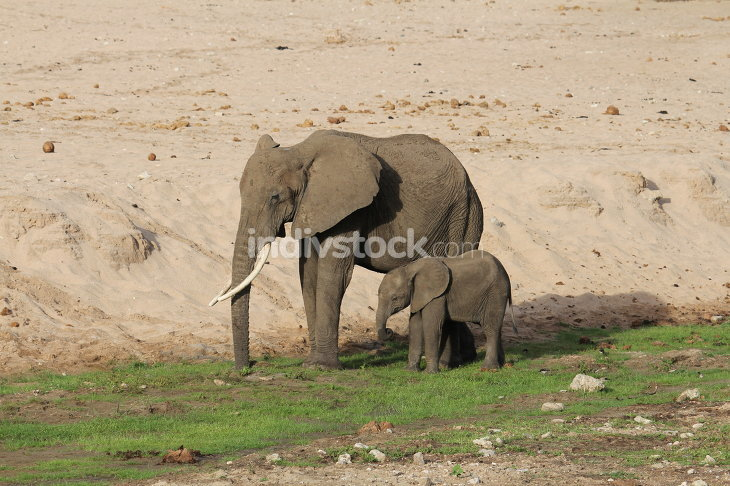 Little elephant and mom
