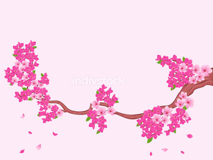 Blooming Sakura branch over light pink