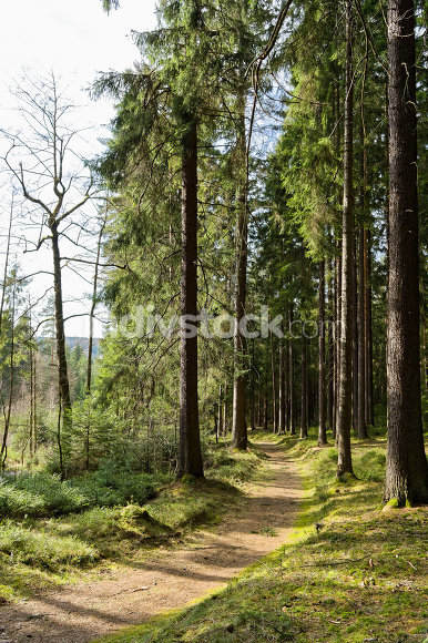 Walk through the forest