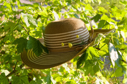 Summer hat in the garden