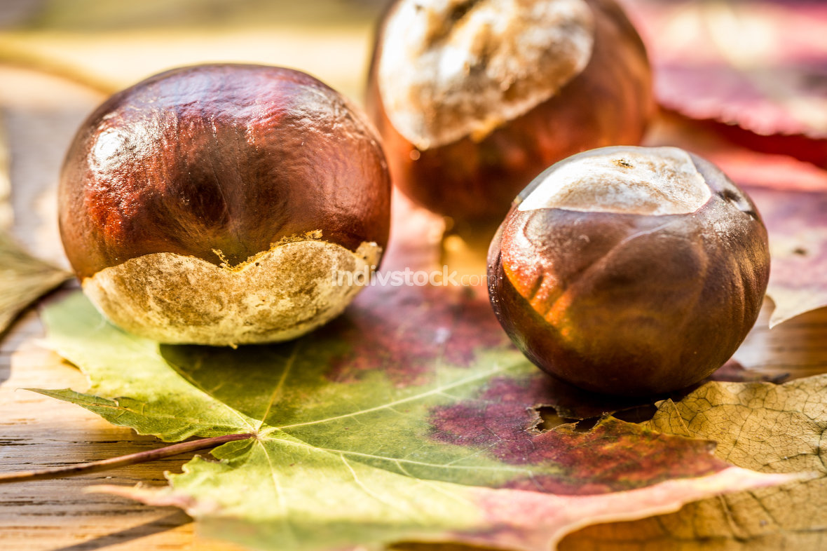 autumn background with colored leaves and chestnut
