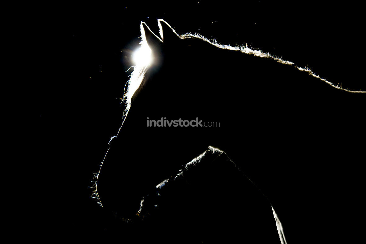 details of horses with backlighting in the meadow