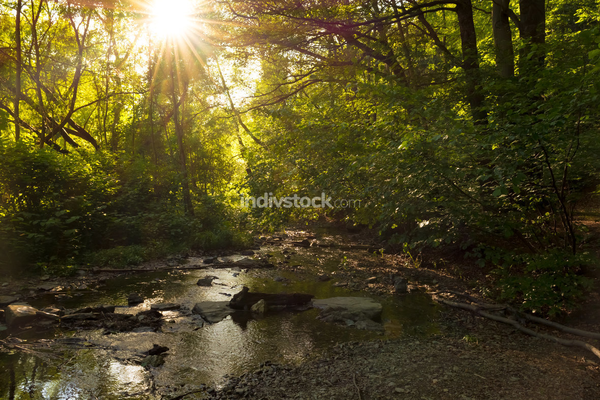 Forest stream with sunlight