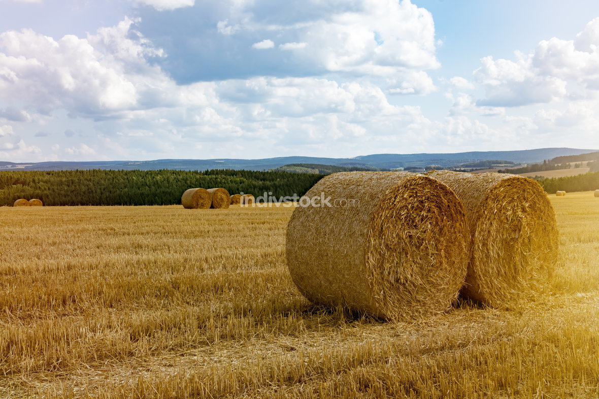 Hay rolls in a field