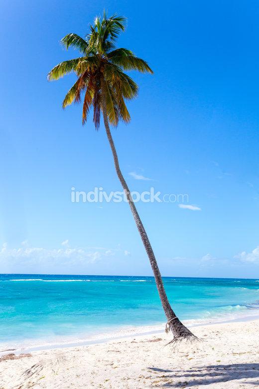 Palme am Strand von Isla Saona