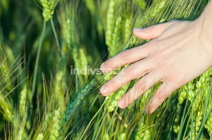 Woman Touching Wheat Ears