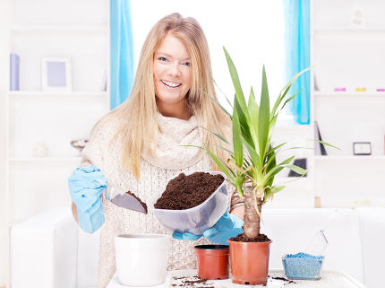 woman transplant plant at home