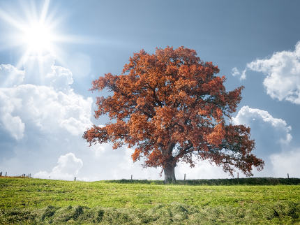 red tree and meadow