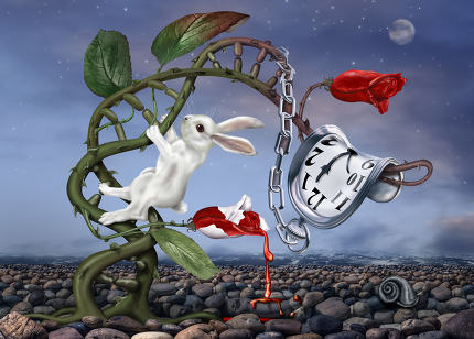 Surreal White Rabbit