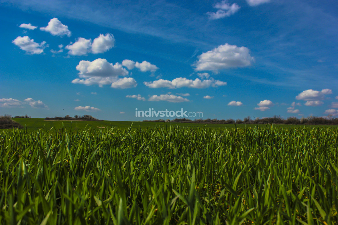 green field and blue sky with clouds in summer day