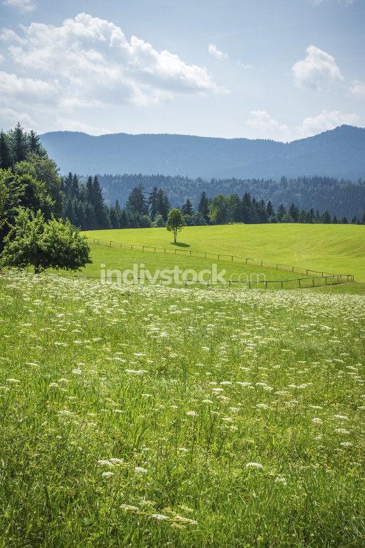 green meadow with flowers