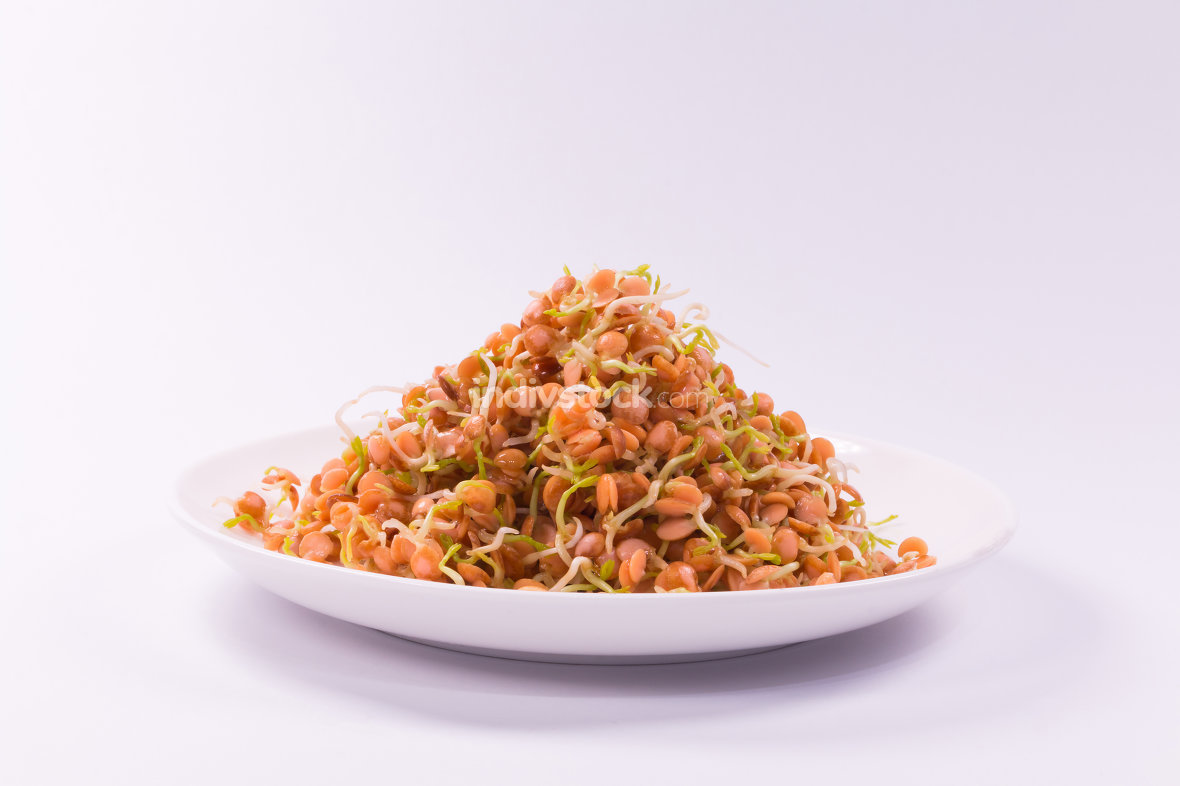 healthy food, sprouts red lentil on white