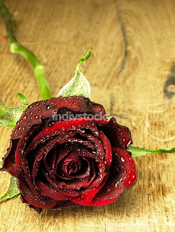 Red rose on the table and dew drops.