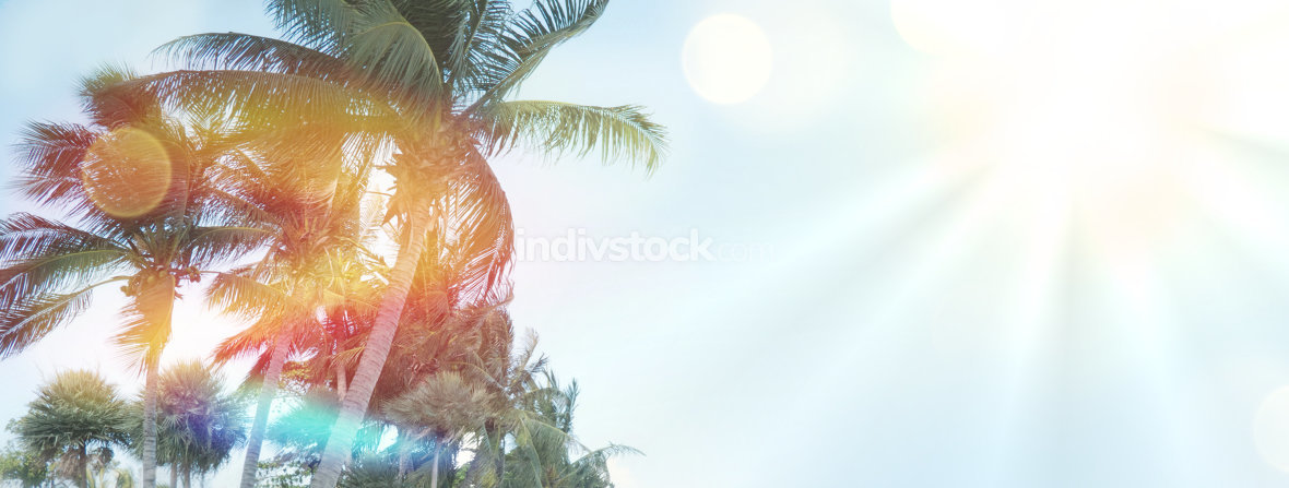 summer palms background sunshine feelings