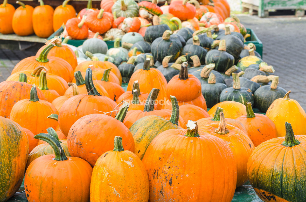 Various pumpkin