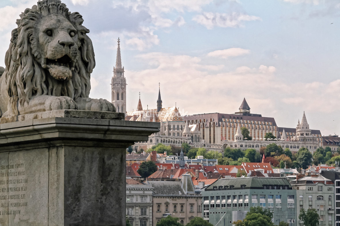 A lion of the Szechenyi Chain Bridge in Budapest, Hungary