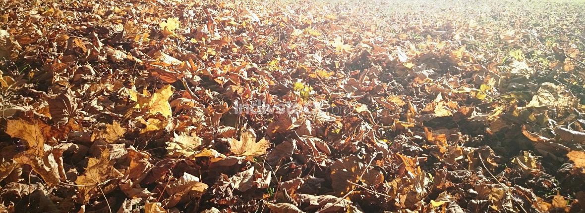 free download: Herbst Laub Blätter Hintergrund