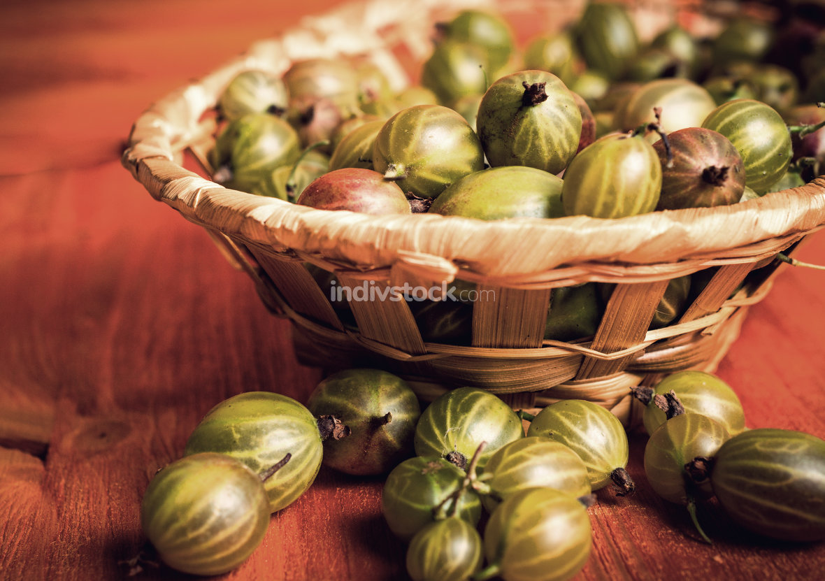 Fresh gooseberries in wicker basket. Vintage