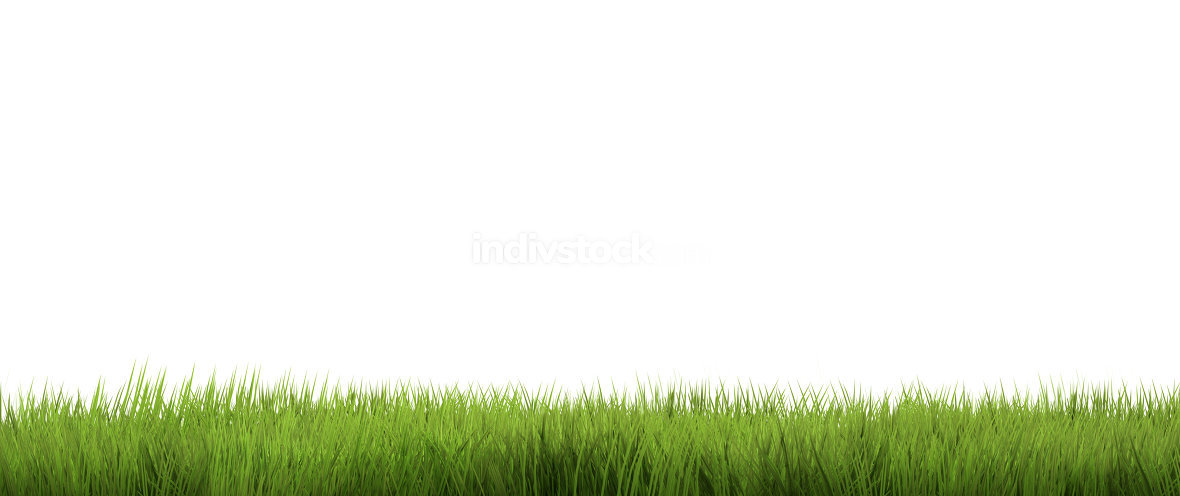 green grass. grass nature background. 3d render.