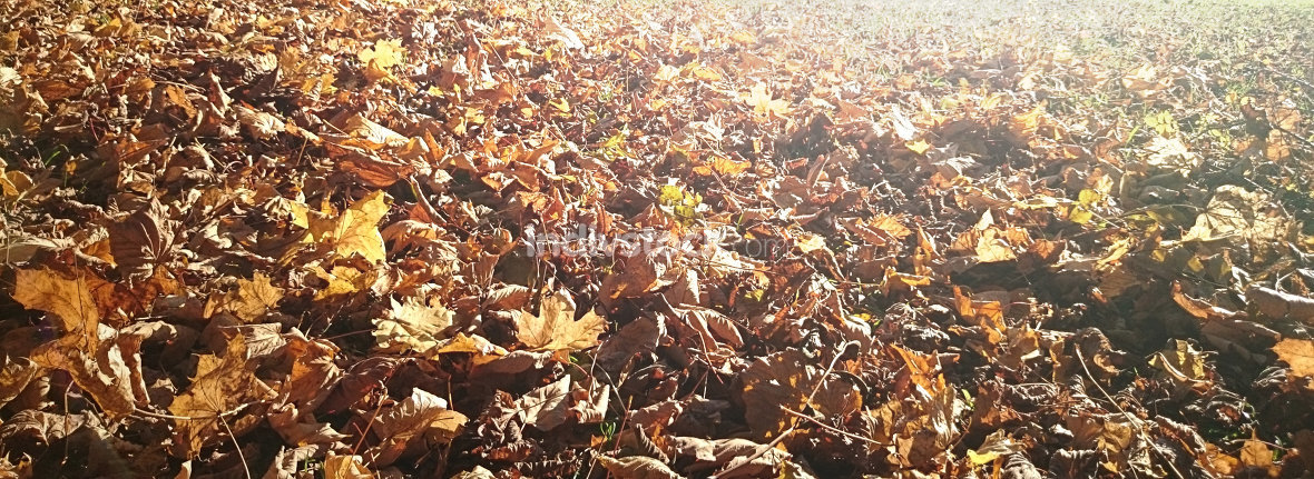 Herbst Laub Blätter Hintergrund