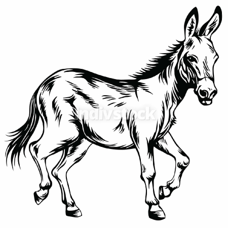 Donkey Stylized Drawing Illustration