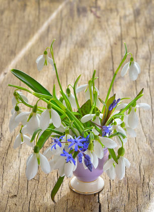 Beautiful bouquet of snowdrops in vase