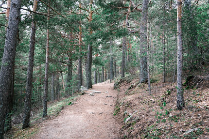 Footpath Passing Through In Forest