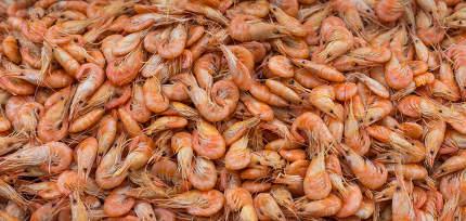 Fresh shrimp at at outdoor seafood market