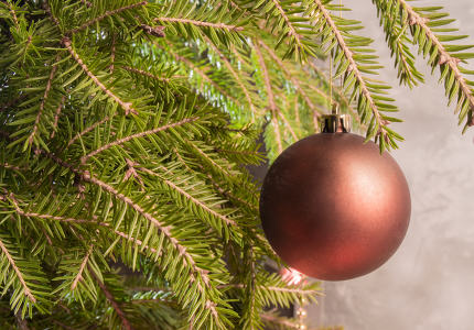 Hanging on the branch of a Christmas ball. Christmas background