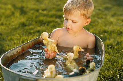 Little cute boy play with duckling