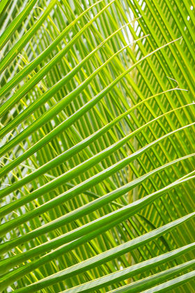 Palm Leave green line composition