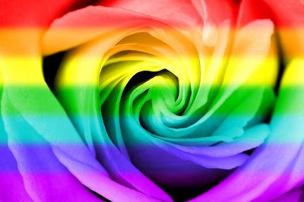 Rainbow flag rose