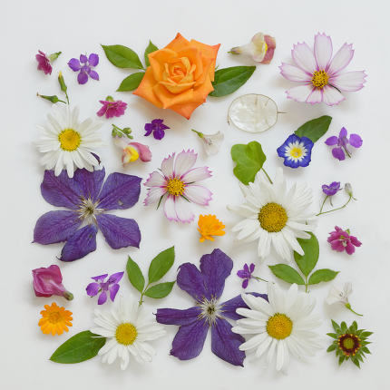 Selection of Various Flowers Isolated